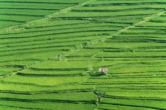Campo bali del arroz de arroz Imágenes de archivo libres de regalías