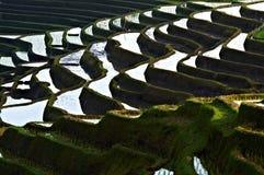 Campo bali del arroz de arroz Fotografía de archivo libre de regalías