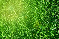 Campo bonito com grama verde como a paisagem Páscoa, mola, Imagens de Stock