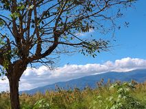 Campo bonito da província de Chiangmai do distrito de Chiang Dao fotografia de stock royalty free