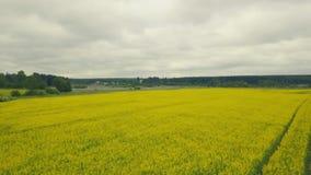 Campo bonito das flores amarelas do verão Flores regionais do campo do verão da vista filme
