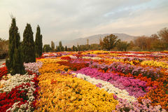 Campo bonito de flores coloridas em um parque Fotos de Stock Royalty Free