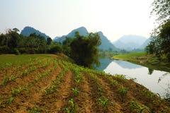 Campo bonito de Quang Binh, Vietname Fotos de Stock