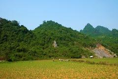 Campo bonito de Quang Binh, Vietname Foto de Stock