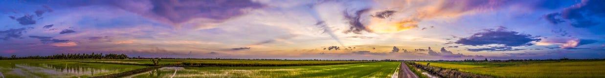 Campo bonito do céu e do arroz do por do sol Imagens de Stock Royalty Free