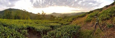 Campo bonito do verde da manhã com o céu nebuloso em Cameron Highland, Malásia imagem de stock