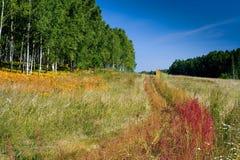 Campo, bosque y cielo Fotografía de archivo
