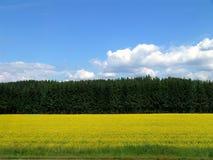 Campo, bosque y cielo amarillos Foto de archivo