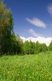 Campo, bosque y cielo hermosos Foto de archivo