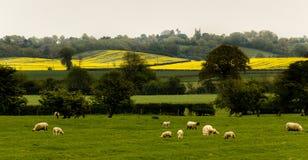 Campo británico Imagen de archivo libre de regalías