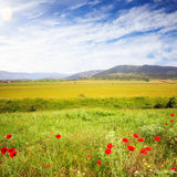 Campo cênico do verão com grama verde e as papoilas vermelhas na parte traseira Imagem de Stock
