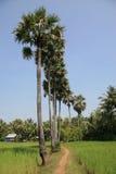 Campo camboyano Foto de archivo libre de regalías