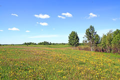Campo cerca de la madera Foto de archivo