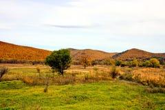 Campo cerca de las montañas foto de archivo libre de regalías