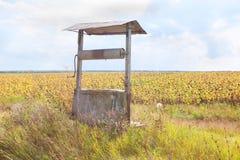 Campo cercano bien de los girasoles Foto de archivo