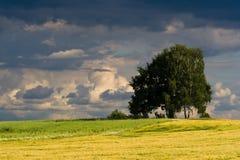 Campo checo antes de la tormenta de la tarde Imagenes de archivo