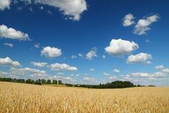 Campo, cielo blu e nubi dorati di frumento Fotografie Stock