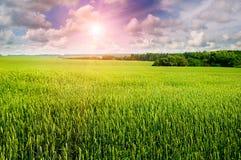 Campo, cielo nuvoloso ed alba Fotografia Stock Libera da Diritti