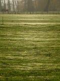 Campo coberto com um tapete das teias de aranha Fotos de Stock