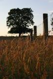 Campo coberto de vegetação Fotos de Stock Royalty Free
