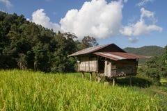 Campo colgante de la cabaña y del arroz del verde Imagenes de archivo