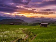Campo colgante de la puesta del sol y del arroz del verde en PA Pong Pieng, Mae Chae fotografía de archivo