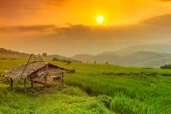 Campo colgante del arroz con el fondo de la choza y de la montaña, Chiang Mai en Tailandia, fondo de la falta de definición Foto de archivo libre de regalías