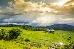 Campo colgante del arroz con los rayos del sol y cielo dramático en PA Pong Pieng Chiang Mai, Tailandia fotos de archivo