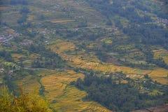 Campo colgante del arroz en montañas de Himalaya de Nepal imagen de archivo