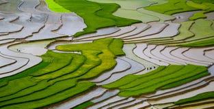 Campo colgante del arroz en MU Cang Chai, Vietnam Imagen de archivo libre de regalías