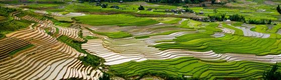 Campo colgante del arroz en MU Cang Chai, Vietnam Imagen de archivo