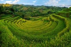 Campo colgante del arroz en MU Cang Chai, Vietnam foto de archivo libre de regalías