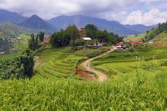 Campo colgante del arroz en Sapa, Vietnam Imagenes de archivo