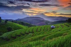 Campo colgante del arroz, Mae Chaem, Chiang Mai, Tailandia Imagen de archivo libre de regalías