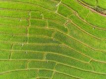 Campo colgante en colina, visión superior del arroz imagen de archivo libre de regalías