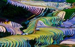 Campo colgante hermoso del arroz en MU Cang Chai, Vietnam Foto de archivo libre de regalías