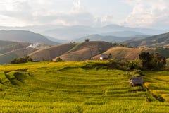 Campo colgante verde del arroz Foto de archivo libre de regalías