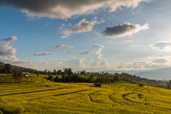 Campo colgante verde del arroz Fotos de archivo libres de regalías