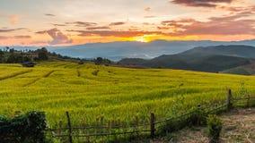 Campo colgante verde del arroz Fotografía de archivo libre de regalías