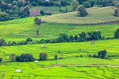 Campo colgante verde del arroz en Chiangmai Imagen de archivo