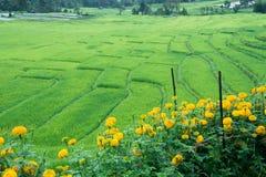 Campo colgante verde del arroz en Chiangmai, Tailandia Fotos de archivo
