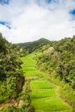 Campo colgante verde del arroz en Chiangmai, Tailandia Imagen de archivo libre de regalías
