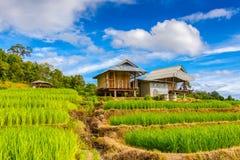 Campo colgante verde del arroz en PA Pong Pieng, Mae Chaem, Chiang Mai fotos de archivo