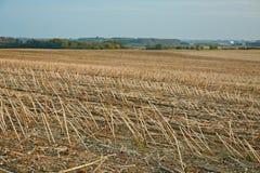 Campo colhido agrícola Foto de Stock