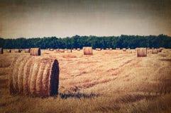 Campo colhido com pacotes da palha, imagem tonificada artística Imagem de Stock