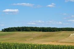 Campo colhido com trigo Imagens de Stock