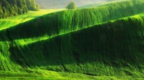 Campo campo collinoso pittoresco Campo agricolo in primavera Fotografie Stock