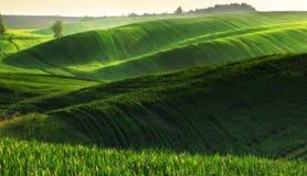 Campo campo collinoso pittoresco Campo agricolo in primavera Fotografia Stock