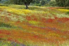 Campo colorato in alentejo nella sorgente. immagini stock libere da diritti