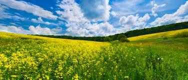 Campo colorido da flor Fotos de Stock